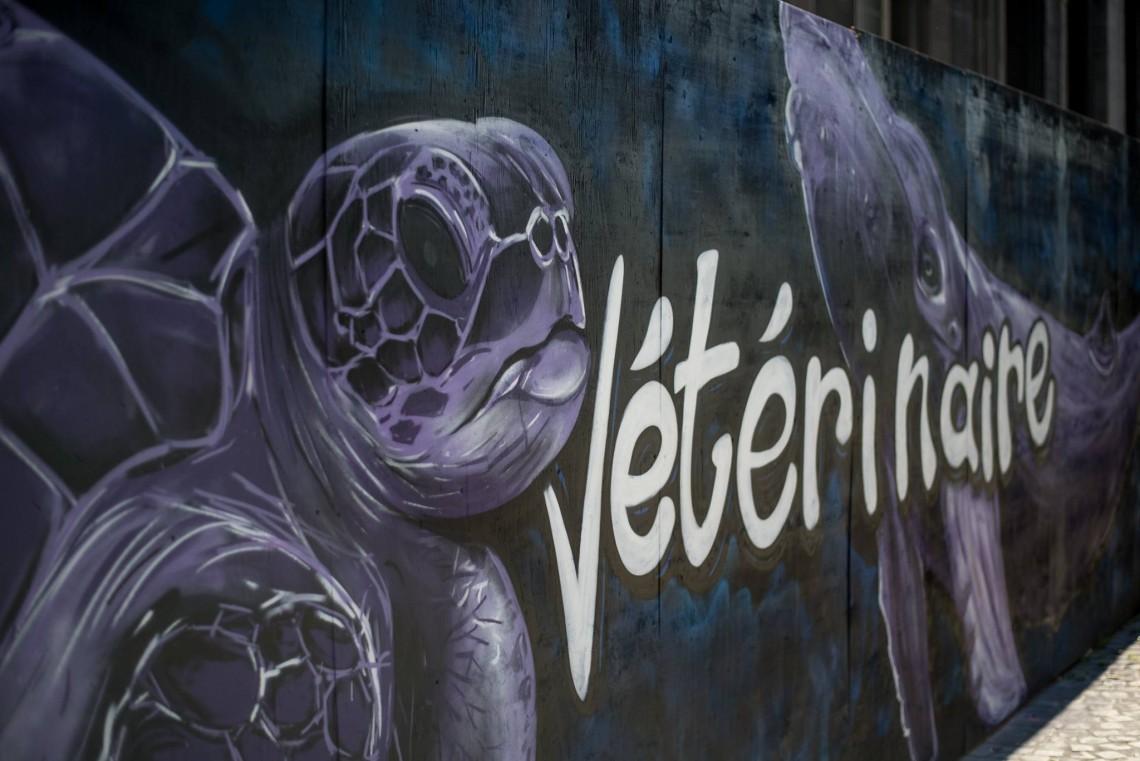 Fresque graphique de couleur violette représentant une tortue de mer et une baleine, ainsi que la faculté vétérinaire