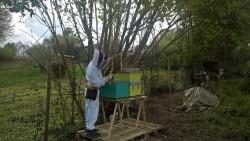 Arno Vandermeulen devant ses ruches en avril 2017