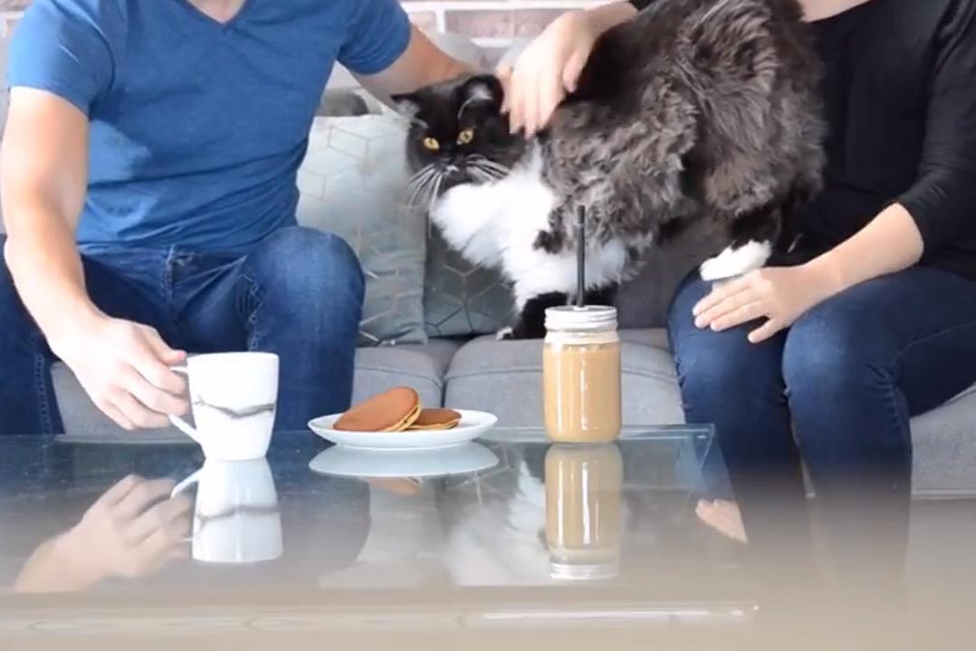 chat gris noir et balnc carressé par deux personnes sur une table de cafédans un café