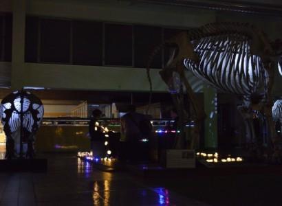 L'aquarium museum de Liège de nuit